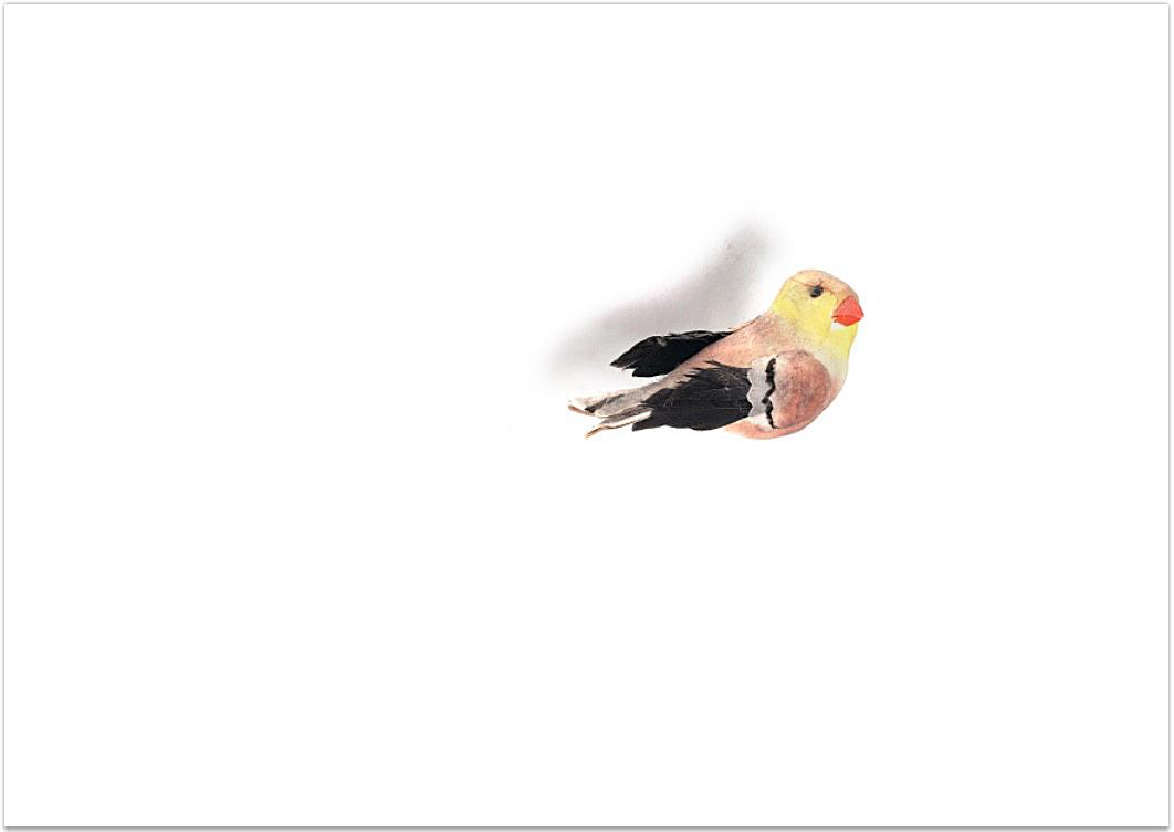 birdinacold magnet